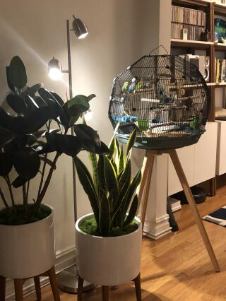 Just beautiful and matches my mid century decor perfectly. My parakeets are happy to have  a cozy home????