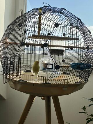 Perfektes Kanarienvogel-Heim