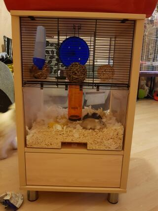 Mouse & Messi loving their new home
