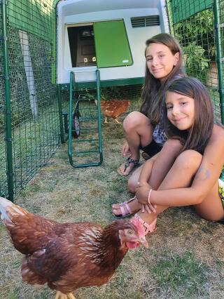 L'arrivée des poules