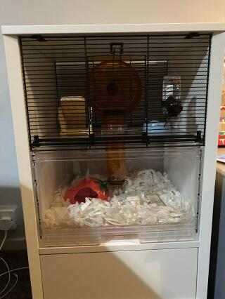 Love the hamster cage looks lovely in my sitting room and also a happy hamster