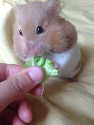 Mmm salad ????