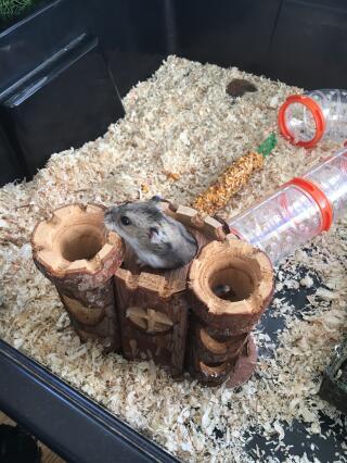 Hamster leker