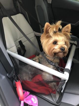 Angel så stolt i sin nya bilstol