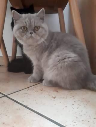 Meine Katze Nala