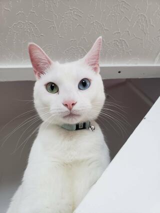 My cat, Snow.