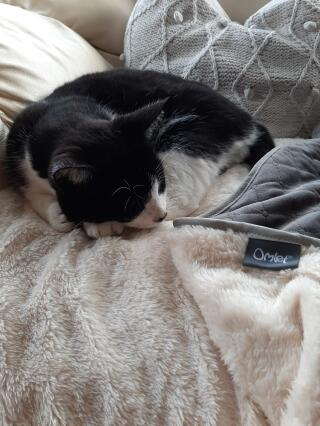 Luxury super soft cat blanket