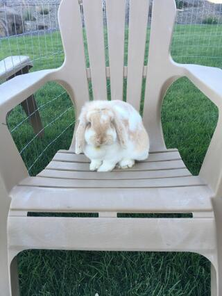Sitting on a chair like a human! :)
