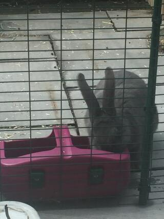 Perfect size for my thirsty continental Giant rabbit