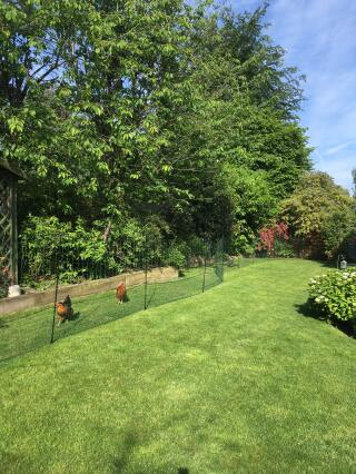 Love this Omlet Fencing!