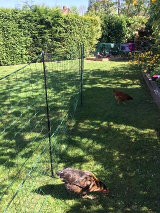 New Omlet Fencing