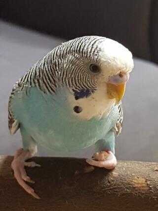 Moffel is geboren met een klompvoetje, maar een heel blij vogeltje