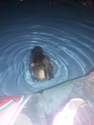 Mi patito bañandose