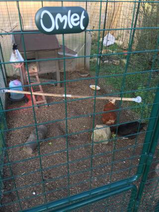 Perchoir pour poules
