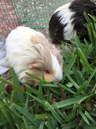 Peaches loves the grass!!