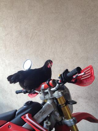 Hen Rider
