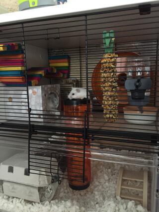 Un vrai petit paradis pour notre hamster russe arrivé à Noël.