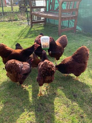 Hühnerauflauf