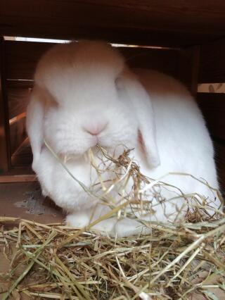 Always eats lots of hay