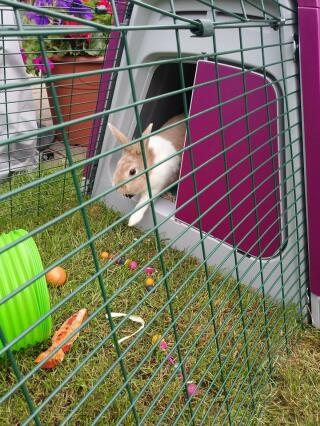 bunny's new house