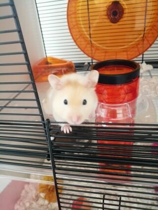 Nacho in his new cage