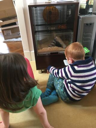 The kids love watching their new pets in their Qute