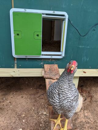 We love our automatic coop door. Thanks Omlet folks.