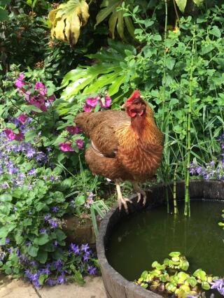 Queen Bea @ the barrel pond