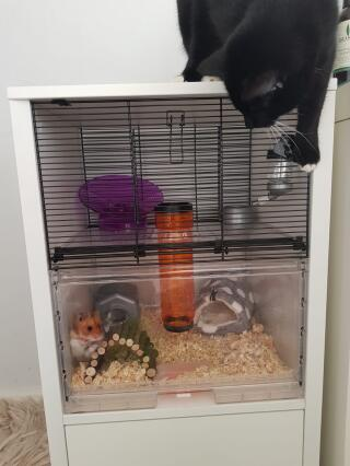 chutney loves her new cage (cat proof!)