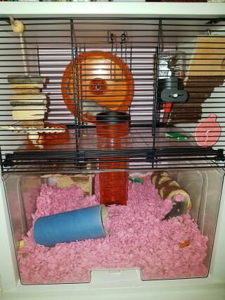 Jumpy and Jingles' pink bedding
