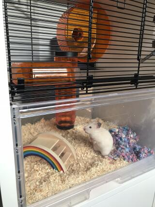 Kiwi exploring her new luxury pad!