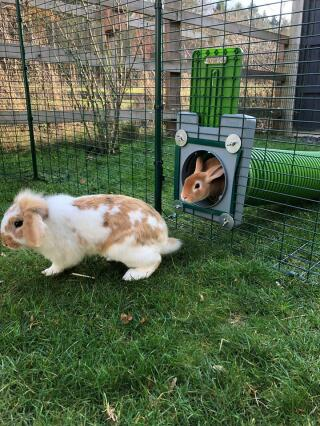 Endless fun for our rabbits and guinea pigs!