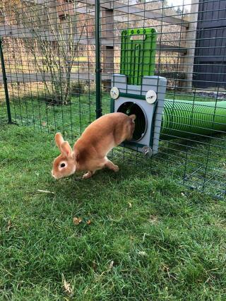 Our bunnies love the tunnels!