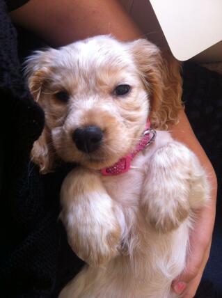Cuddly puppy!