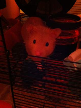 Henry loves his cage x