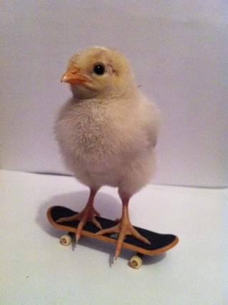 Sussex Chick!