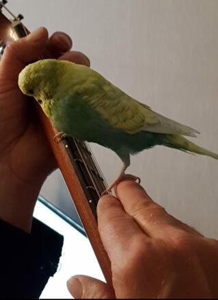 Captain Beaky & his guitar
