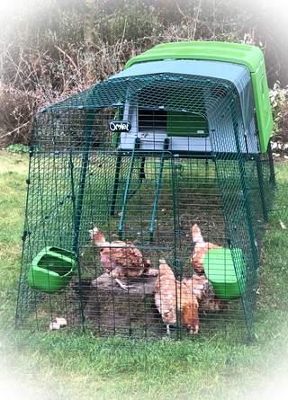 Kippen duidelijk tevreden