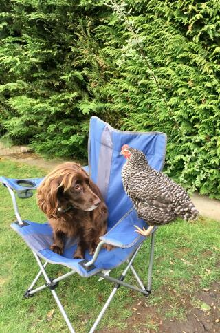 Libby the Spaniel and Sybil the Speckledy