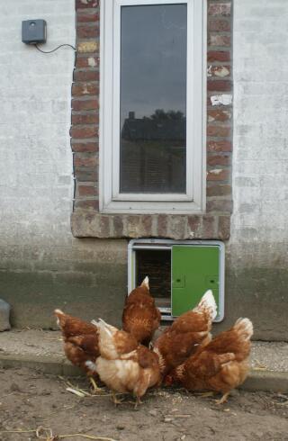 bevestiging onder raam van stenen kippenhok