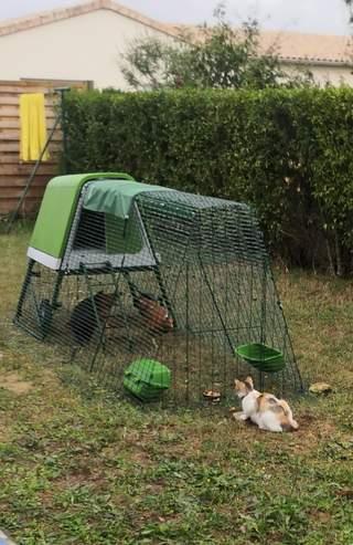 Quand notre chat fait connaissance avec nous nouvelles pensionnaires