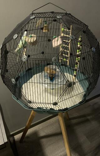 Received my Geo BirdCage! So beautiful! It was easy to setup and very innovative. My guest will be very fascinated with the cage! It is so much more spacious for my budgies! ????????????????