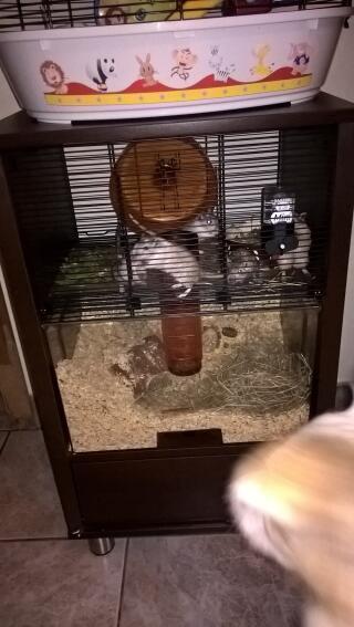 cage parfaite pour les gerbilles