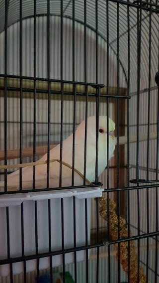 My new bird