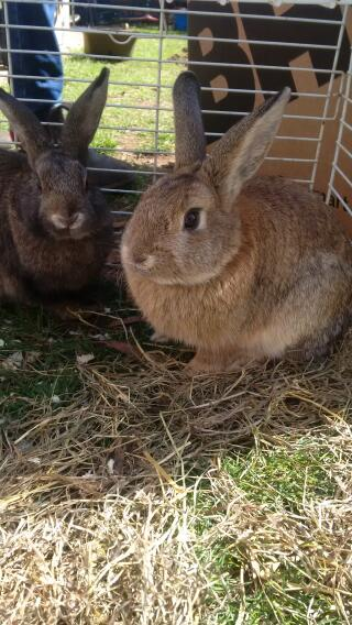 our new male rabbits