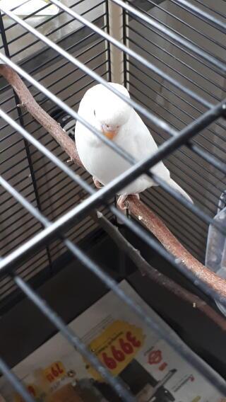 Hona eller hane?