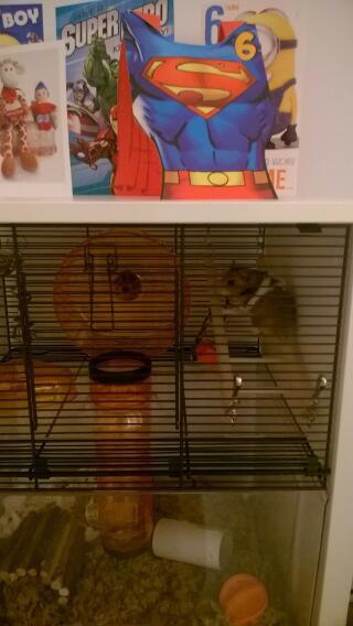 Gimli Loves his new home!
