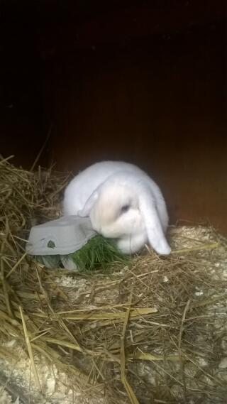 blue eyed white playing with egg box toy buddleia bunnies