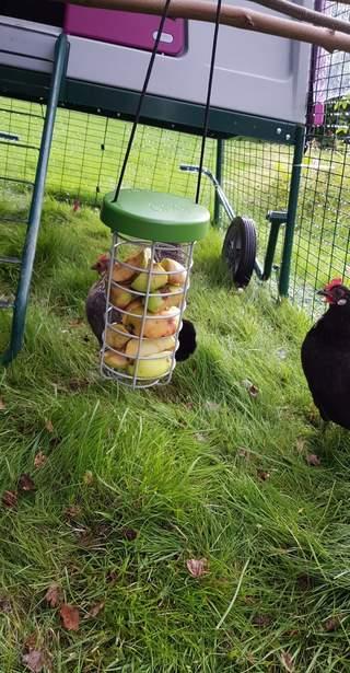 Glade høner