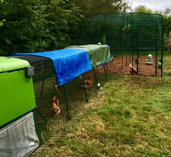 Lovely new walk in run attached to our smaller run. Now the girls have room to roam even when we are not at home! ☺️
